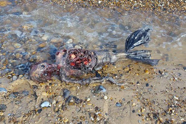 イギリスで人魚発見