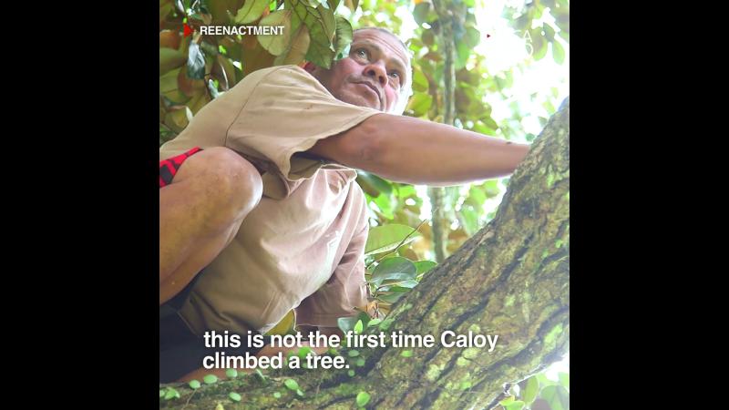 ヤシの木で三年生活してた男