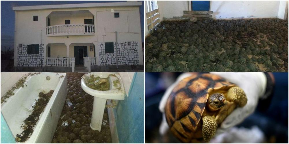 恐怖マダガスカルのカメハウス
