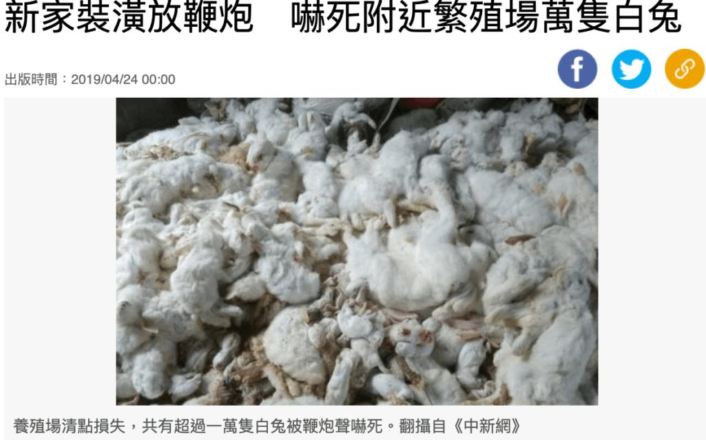 中国の爆竹が怖くてウサギ大量死事件