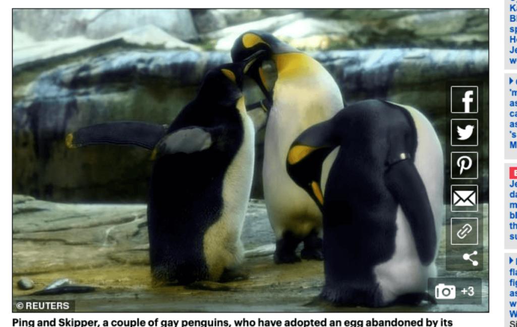 同性愛のペンギンカップル父になる