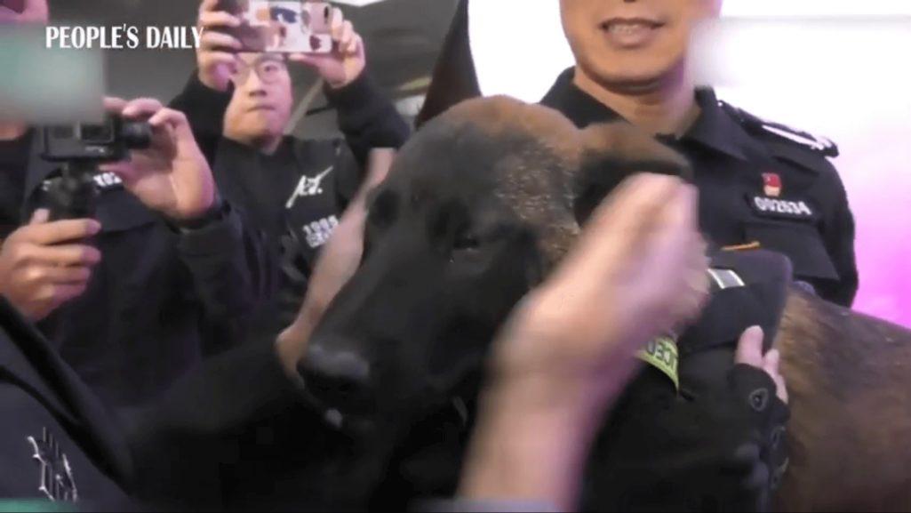 中国でクローン警察犬誕生
