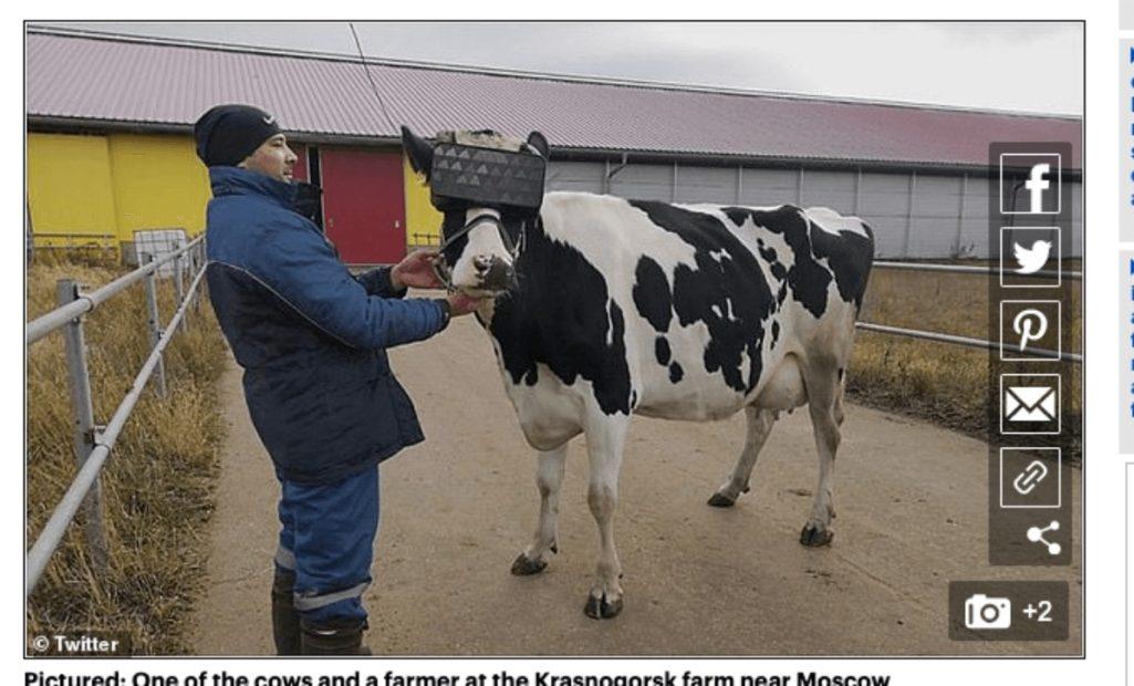 牛にVR酪農