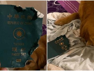 飼い主を新型肺炎から守った愛犬の奇跡