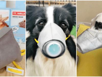 新型肺炎で犬用マスクの需要が急増