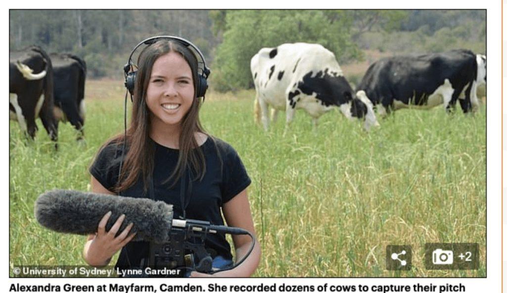 牛たちの会話研究