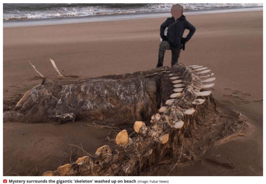 嵐の後にネッシーの骨を発見