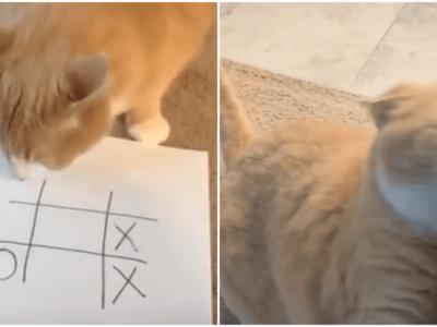 猫はマルバツゲームで負けると激怒する説