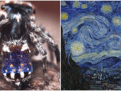 ゴッホの絵画みたいに芸術的な新種の蜘蛛を発見