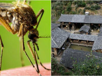 未解決の謎ー中国にある蚊のいない村