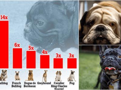 熱中症になりやすい犬種ランキング