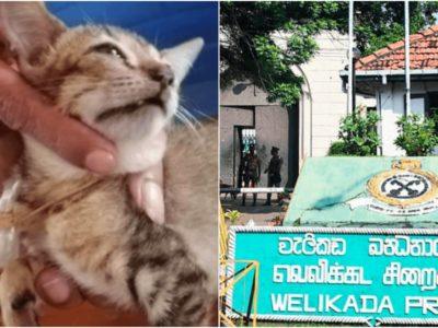 麻薬の運び屋猫を逮捕