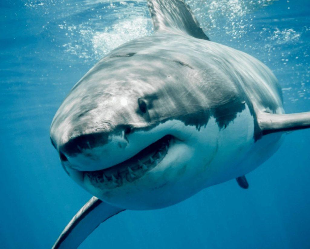 新型コロナワクチン製造でサメが絶滅の危機