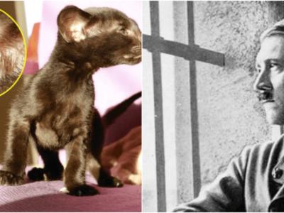 猫耳ヒトラー