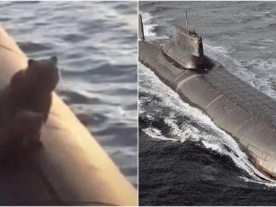 原子力潜水艦の上に熊の親子が出没