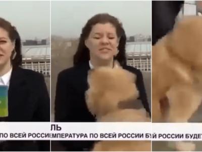 生放送中に犬がマイクを強奪動画