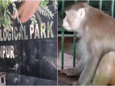 凶悪なアル中サルは檻の中で終身刑