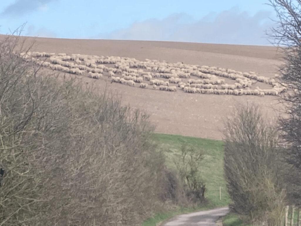 ミステリー羊サークル