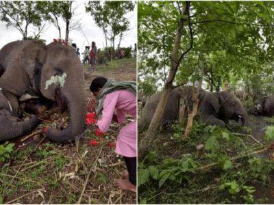 象が謎の大量死の原因は