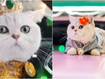 トップ猫モデル