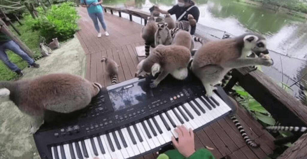 孤独な動物の心を癒やす少女の演奏会
