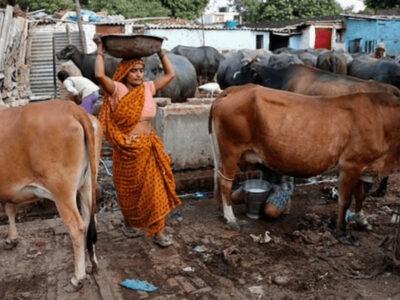 牛のウンコ800kg盗難事件発生