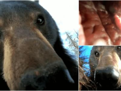 落としたGoProに熊の自撮り動画